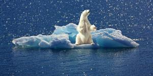 Animales en peligro de extinción del Polo Norte