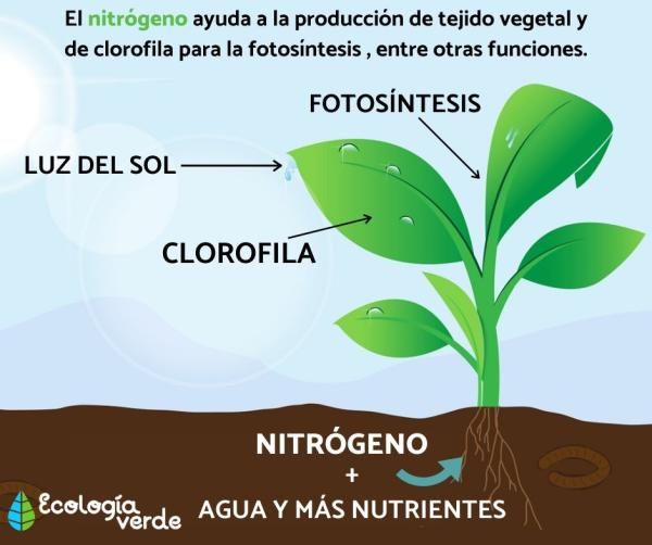 Función del nitrógeno en las plantas y su importancia