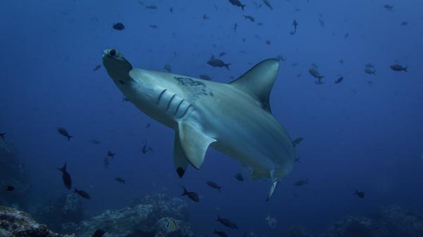 ¿Los tiburones duermen? - Los tiburones duermen, ¿sí o no?