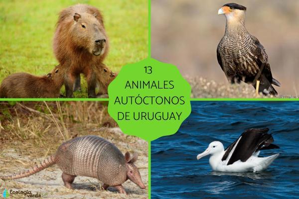 Animales autóctonos de Uruguay