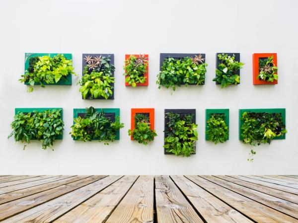 Regalos ecológicos para mujeres - Regalos naturales para mujer: plantas
