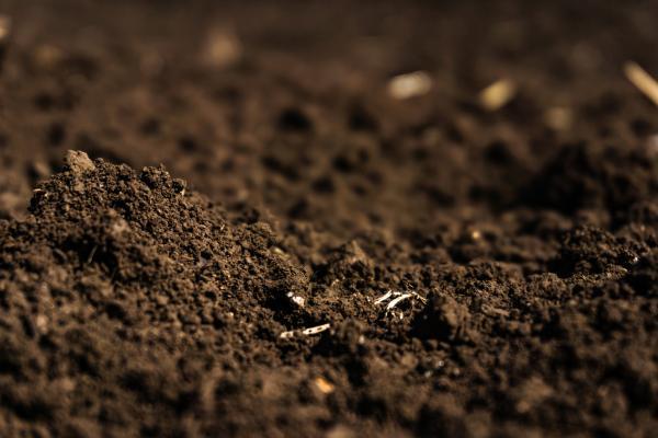 Turba: qué es, tipos y cómo usarla - Qué es la turba para las plantas