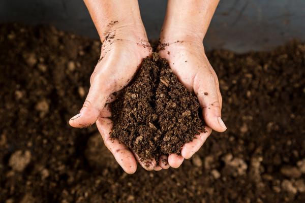 Turba: qué es, tipos y cómo usarla - Qué plantas necesitan turba