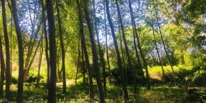 Bosque de galería: qué es, flora y fauna