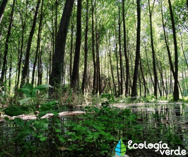Bosque de galería: qué es, flora y fauna - Flora del bosque de galería