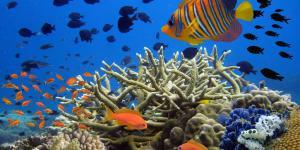 Fondos marinos: qué son, tipos y fotos