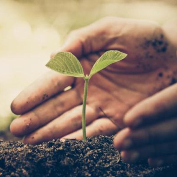 cuales son los seres vivos que necesitan de las plantas