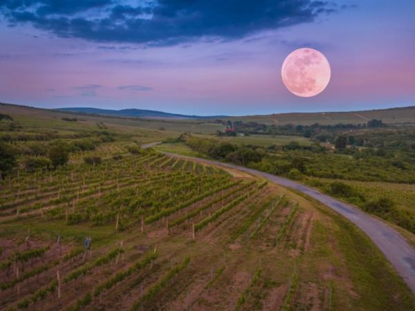 Cuál es la influencia de las fases de la luna en la agricultura - Cómo aprovechar la luna llena para la agricultura