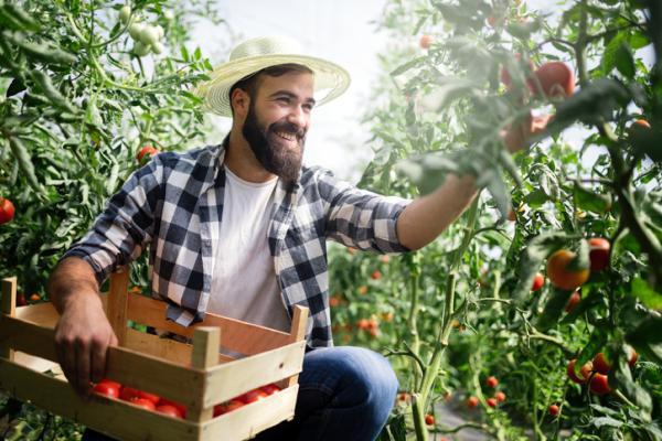 ¿El tomate es una fruta o una verdura? - ¿El tomate es una fruta o una verdura? - la respuesta
