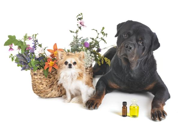Qué son los aceites esenciales - Usos de los aceites esenciales en el embarazo, en niños y en animales