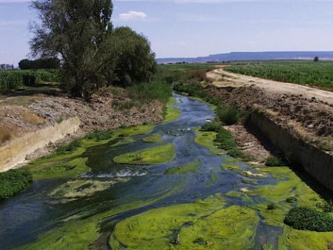 ¿Qué es la eutrofización?
