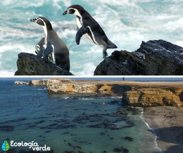 Mar peruano: características y animales