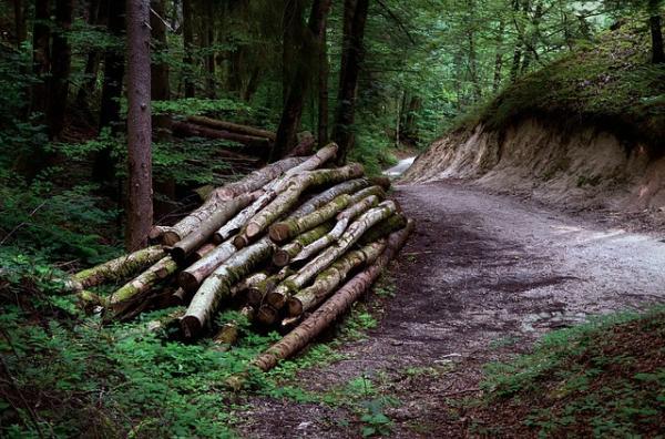 Cuánto tiempo tarda en degradarse la madera