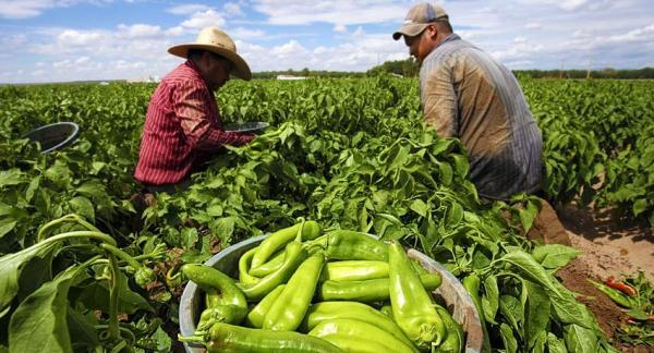 Beneficios de la comida ecológica - Conclusiones