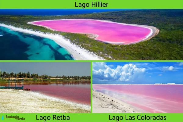 Lagos rosas: por qué hay y cuántos hay - Nombres y ubicación de los lagos rosas