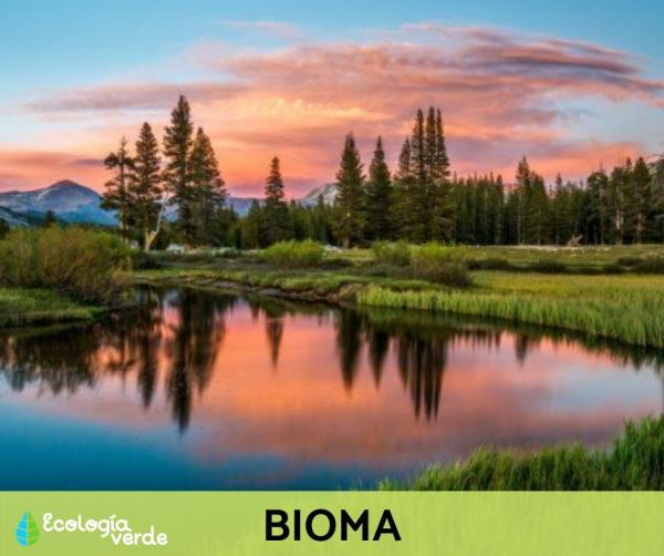 Niveles de organización ecológica: cuáles son y ejemplos - Nivel de organización ecológica 5: bioma - con ejemplos