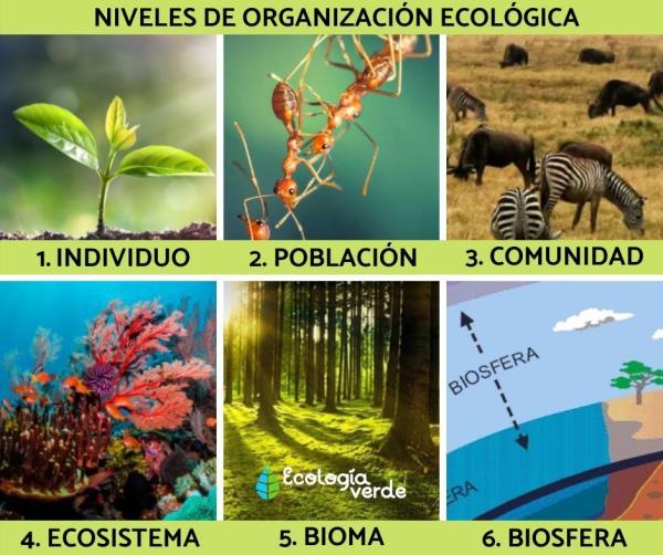 Niveles de organización ecológica: cuáles son y ejemplos