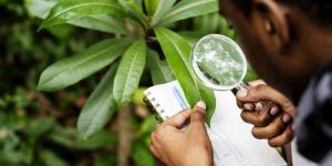 Ecofisiología: qué es y ejemplos