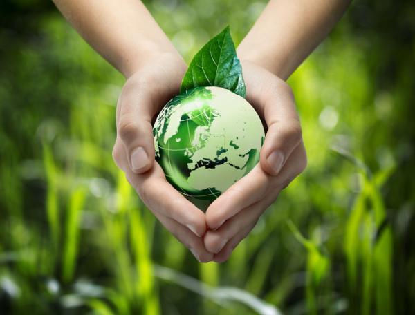 Cuál es la importancia de la educación ambiental - La importancia de la educación ambiental