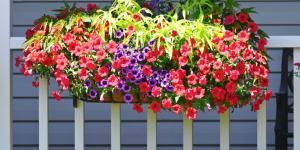 Plantas colgantes de sol