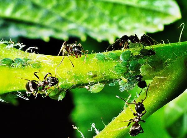Qué es simbiosis en ecología con ejemplos