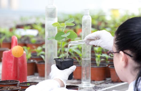 Ramas de la botánica y qué estudia cada una - Fitoquímica