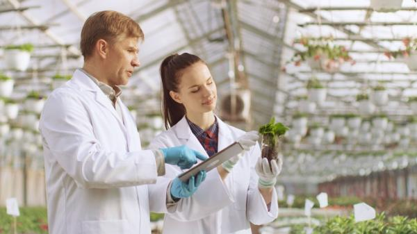 Ramas de la botánica y qué estudia cada una - Geobotánica