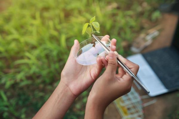 Ramas de la botánica y qué estudia cada una