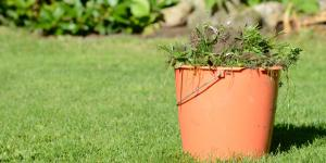 Cómo eliminar las malas hierbas del césped