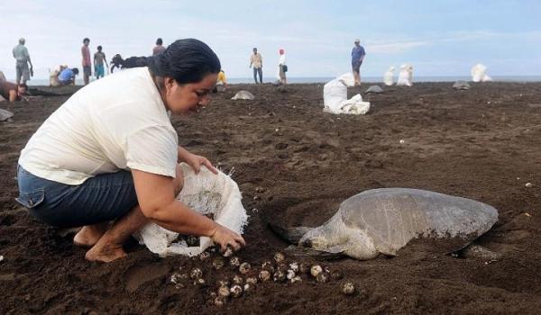 Tortugas en peligro de extinción
