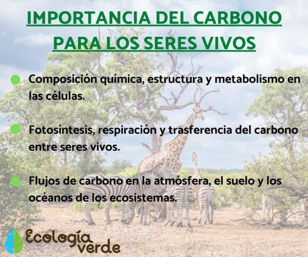 Cuál es la importancia del carbono en los seres vivos