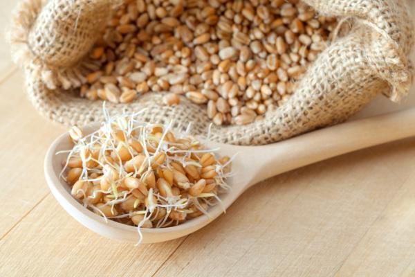 Germen de trigo: propiedades, beneficios y contraindicaciones
