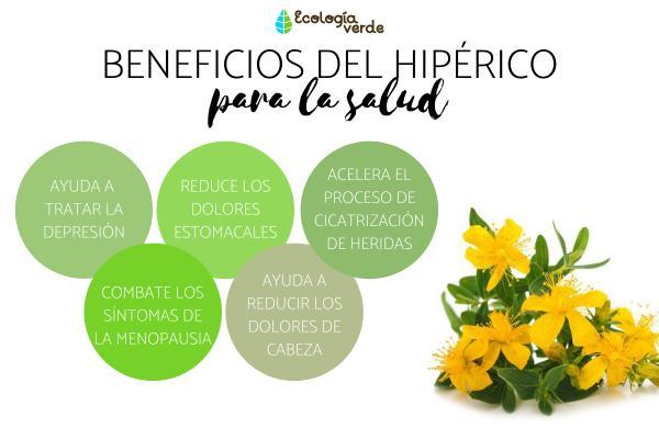 Hipérico: propiedades, beneficios y contraindicaciones - Beneficios del hipérico