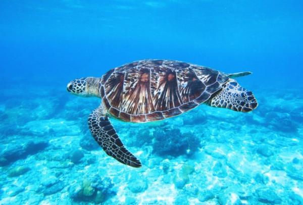 Océano Atlántico: características, flora y fauna -  Fauna del Océano Atlántico