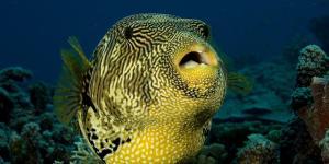Cómo respiran los animales acuáticos