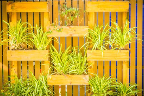 Cómo hacer jardines verticales - Cómo hacer un jardín vertical con palets