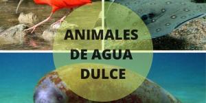 +35 Animales de agua dulce