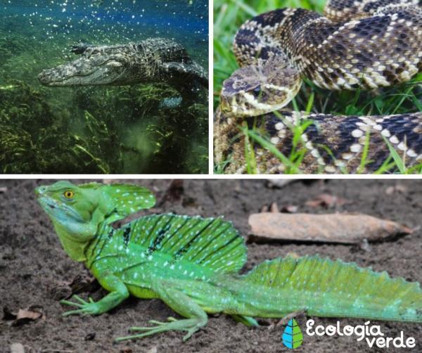 +35 Animales de agua dulce - Reptiles y anfibios de agua dulce
