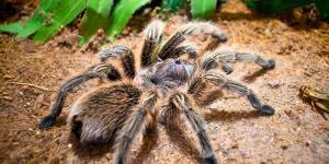 La importancia de las arañas