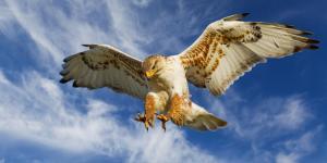 112 aves de rapiña o rapaces: tipos, nombres y fotos