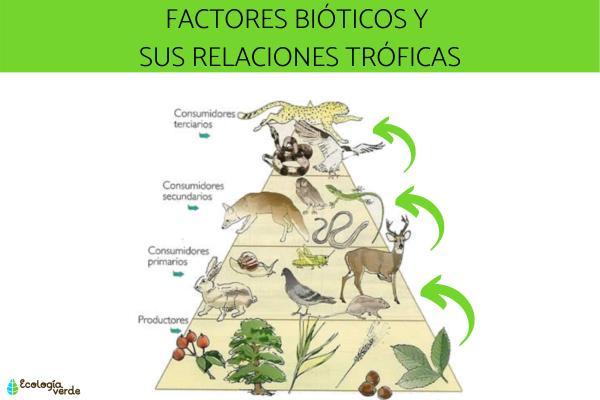 Factores bióticos: qué son, características, clasificación y ejemplos - Clasificación de los factores bióticos