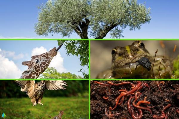 Factores bióticos: qué son, características, clasificación y ejemplos - Ejemplos de factores bióticos terrestres