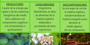 Factores bióticos: qué son, características, clasificación y ejemplos
