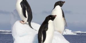 Dónde viven los pingüinos y de qué se alimentan