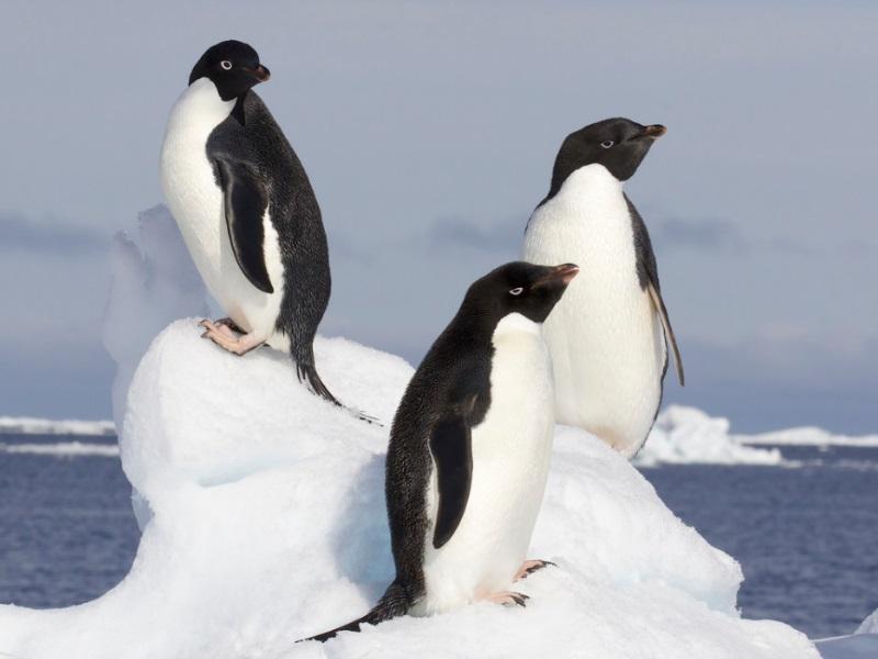 Dónde viven los pingüinos y de qué se alimentan - INFORMACIÓN COMPLETA