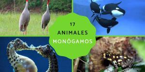 Animales monógamos: qué son y lista con ejemplos