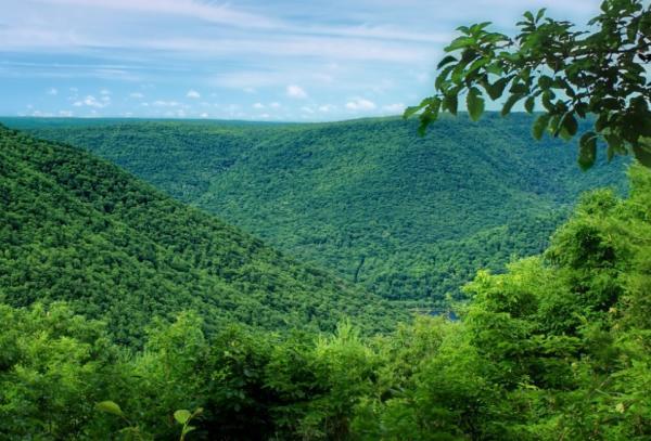 Tipos de selvas y sus características - Tipos de selva según altitud