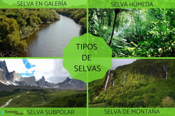 Tipos de selvas y sus características