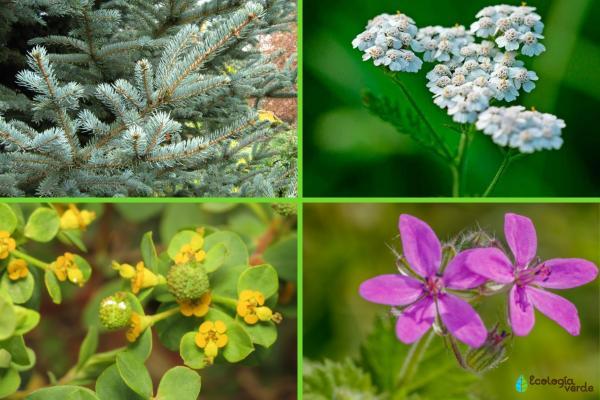 Flora y fauna de Cataluña - Flora de Cataluña