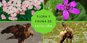 Flora y fauna de Cataluña